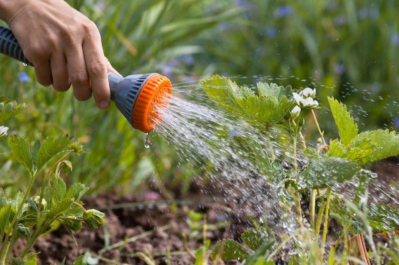 jak podlewać ogród